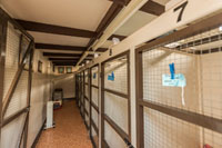 Brockmoor Boarding Cattery single chalets indoor